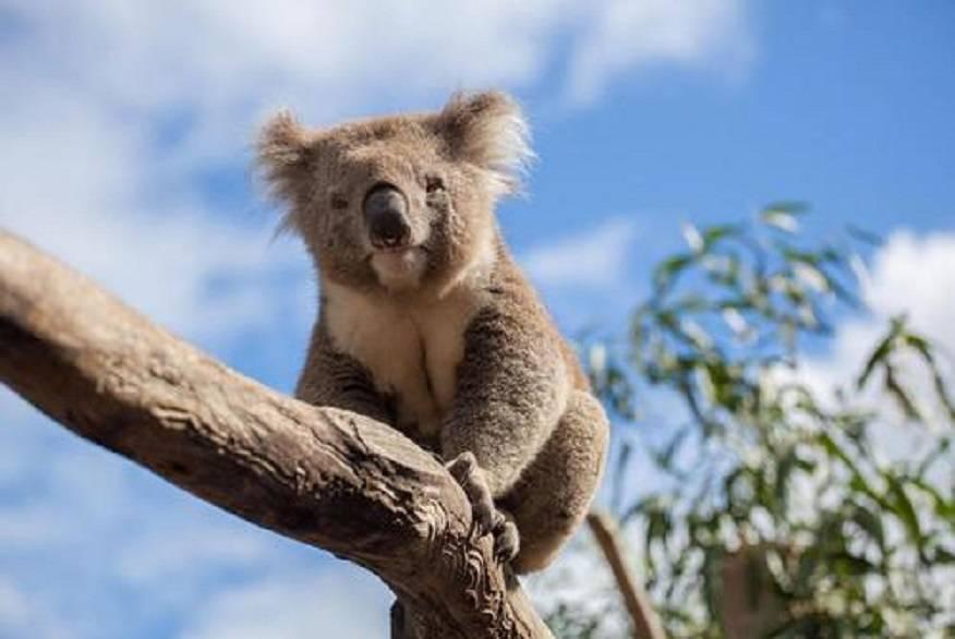 澳洲留学作业分数低挂科没毕业怎么办?